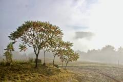 Fluweelboompjes met uitzicht